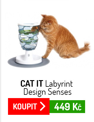 Cat It Labyrint Design Senses